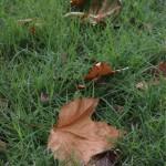 秋の気配がいろんなところに染みてくる