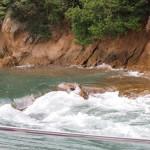 ■松山・芸予諸島の旅■2日目■大島で潮流体験して村上水軍の気分に浸る