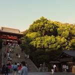 鎌倉近美から初夜と蓮根へ